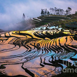 Reflecting Terraces by Inge Johnsson