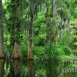 Reflection Swamp by Debbie Green