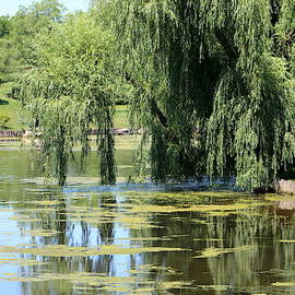 Reflections From Mother Willow by Colleen Cornelius