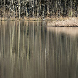 Reflections In The Wetlands by Todd Henson
