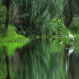 Reflections of Xochimilco  by Sue Cullumber