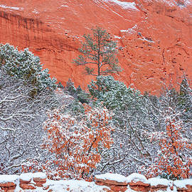 Rejoicing In Our First Snow Storm Of The Season, October 10th, 2019, Garden Of The Gods, Colorado by Bijan Pirnia