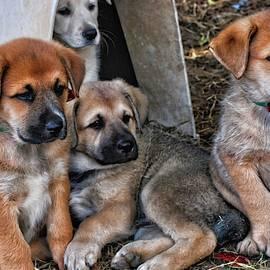 Rescue Puppies by Cathy P Jones