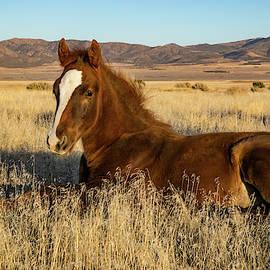 Kent Keller - Resting Foal