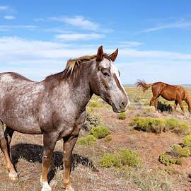Rez Horses by Kathleen Bishop