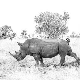 Rhino Business by Hamish Mitchell