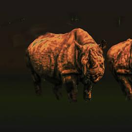 Rhino by Leif Sohlman