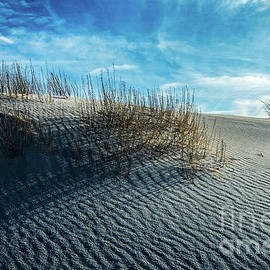 Rippled Dunes by Stephen Whalen