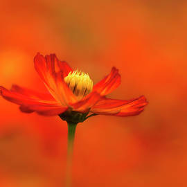 Rise and Shine by Carol Eade