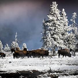 Roaming In Winter by Karen Wiles