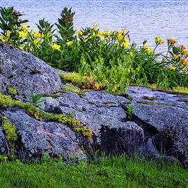 Rocks And Flowers by Tom Singleton