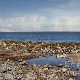 Tom Gari Gallery-Three-Photography - Rocks on Driftwood Beach