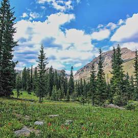 Rocky Mountain Wildflowers by Lorraine Baum