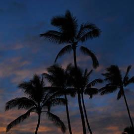 Romance Palms by Kelly Wade