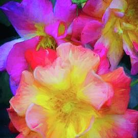 Rose 392 by Pamela Cooper