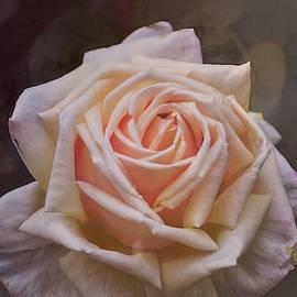 Rose 401 by Pamela Cooper