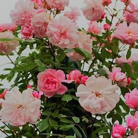 Rose Bouquet in Garden by Loretta S