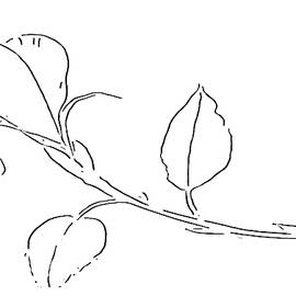 Rose Bud at Paint My Sketch Art Group by Delynn Addams