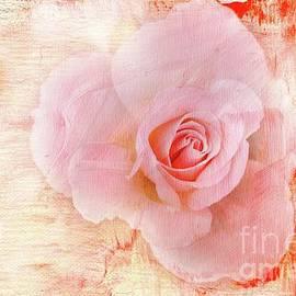 Rose for Valentine's by Eva Lechner