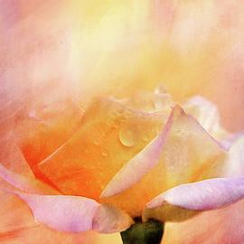 Rose in Wind by Terry Davis