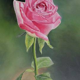 Rose of Faith by Louise Williams