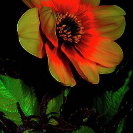 Rose Of Sharon. by Alexander Vinogradov