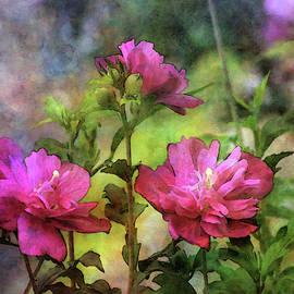 Rose Of Sharon Garden 3846 Idp_2 by Steven Ward