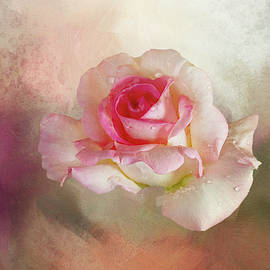 Rose on Textured Sky by Terry Davis