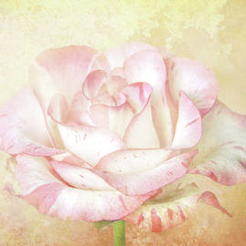 Rose So Soft by Terry Davis