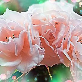 Rose Trio by Trudee Hunter