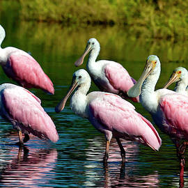 Roseate Spoonbills by Sally Weigand
