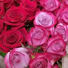Roses galore by Gayle Miller