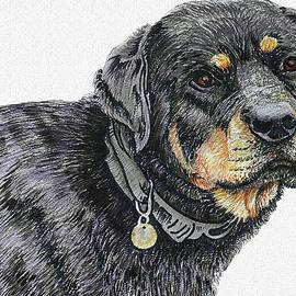 Rottweiler Portrait by Asp Arts