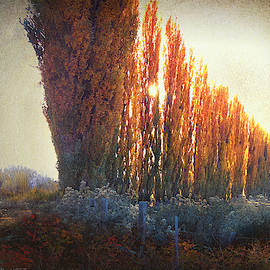 Row Of Poplar Trees by R christopher Vest