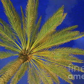 Royal Florida Palm and the Blue Hour by Dora Sofia Caputo