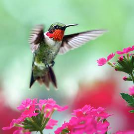 Ruby Garden Jewel by Christina Rollo