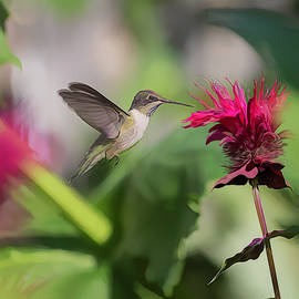 Ruby-throated Hummingbird 2019-artistic by Thomas Young