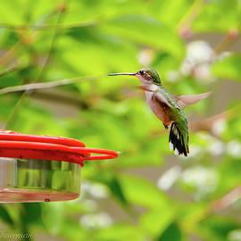 Ruby Throated Hummingbird by Kathi Isserman