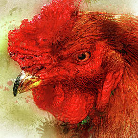 Rule the roost  by Geraldine Scull