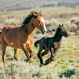 Running Wild Mustangs - Mom And Baby by Judi Dressler