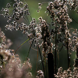 Rushes And Cattails 7g by Gerry Gantt