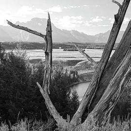 Rustic  Jackson Hole Tree Vista by Norma Brandsberg