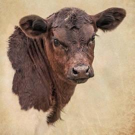 Rustic Texas Longhorn Calf Portrait by Jennie Marie Schell