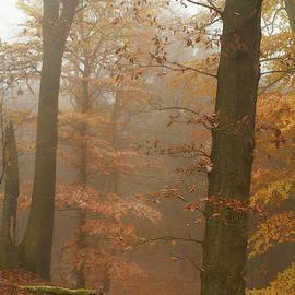 Rusty Autumn in Misty Woods 2 by Jenny Rainbow