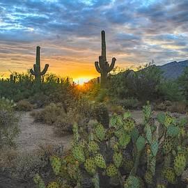 Sabino Canyon and Mount Kimball Sunset, Tucson, AZ by Chance Kafka