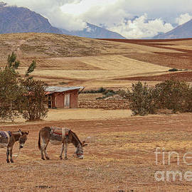 Sacred Valley Ranch by Michelle Tinger