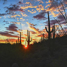 Saguaro Excellence by Chance Kafka