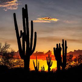 Saguaro Silhouetted Sonoran Sunset  by Saija Lehtonen