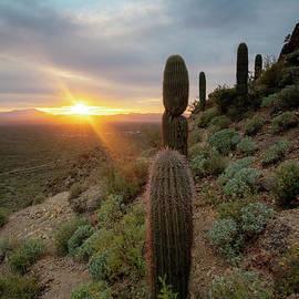 Mike Dawson - Saguaro Sunburst