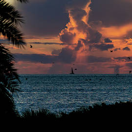 Sailing Home by Susan Molnar